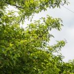 tree26163