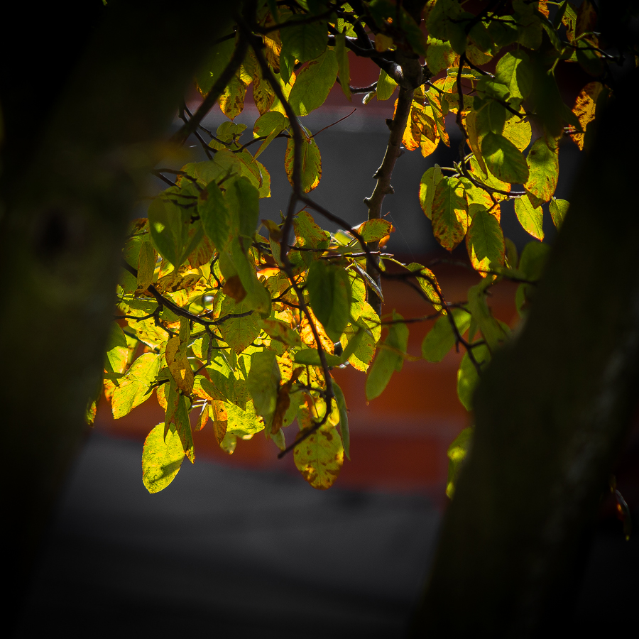 treesept171