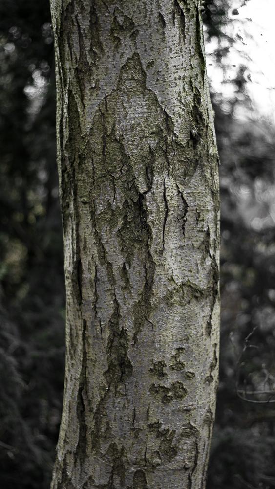 trunk5